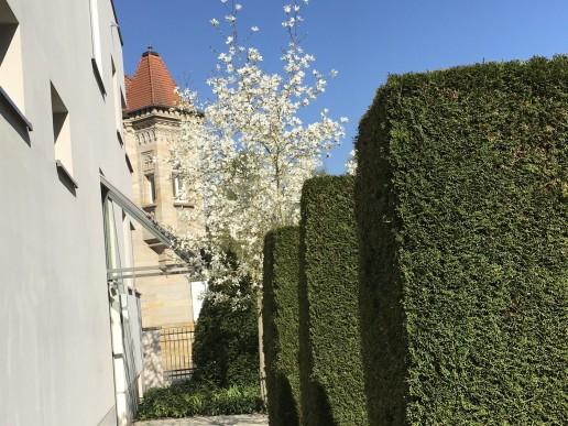 Stilfragen - Bauhausstil mit Thujen-Formelementen und Kobushi-Magnolien