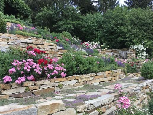 Trockenmauern mit Rosenträumen, Lavendel,Thymian und Prachtstauden